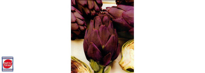 Ny kronärtskocka i sortimentet - Purple Romagna