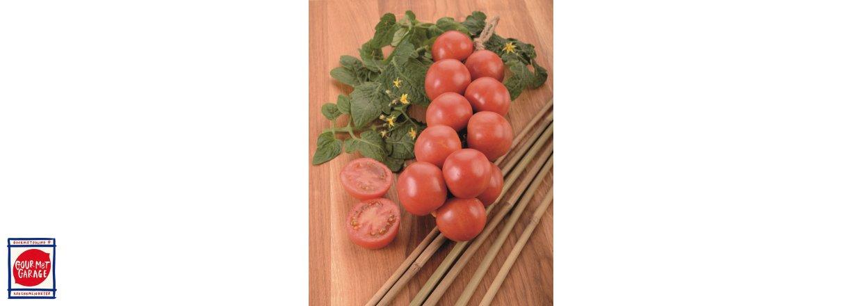 Mallorcas hängande tomater!