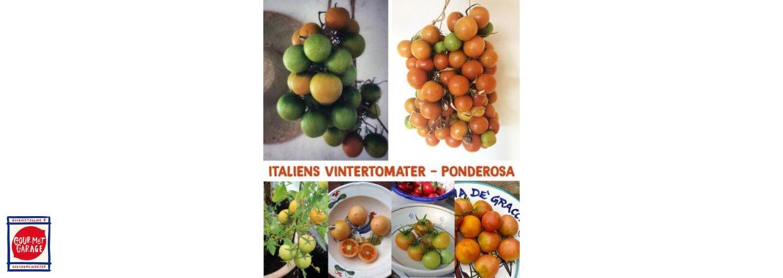 Italiens hållbara tomater kommer INTE från Serbien