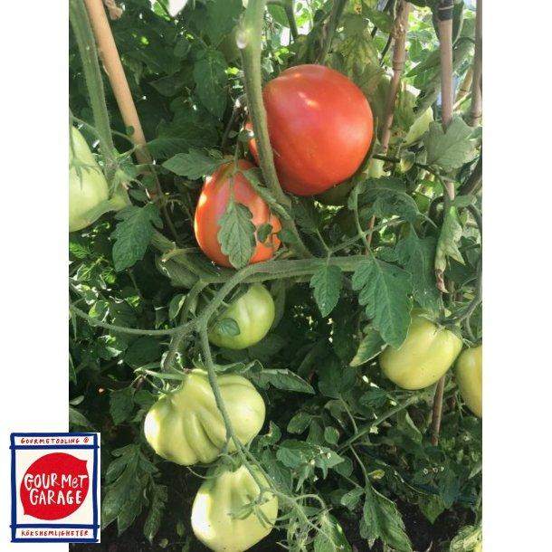 Tomat Canestrino