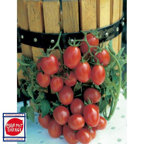 Tomat Crovarese