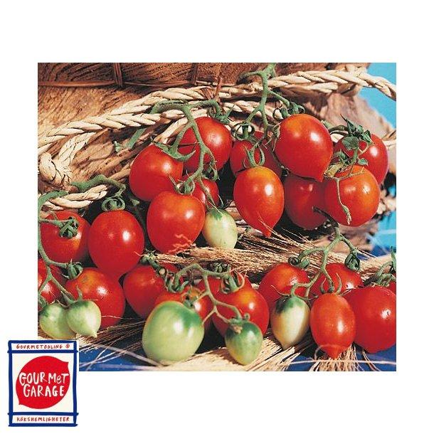 Tomat Principe Borghese da appendere