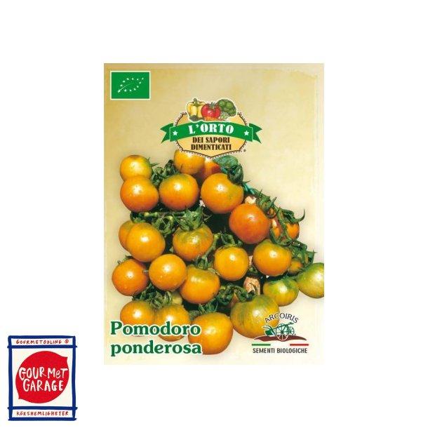 Tomat Ponderosa - vintertomat - ekologiska fröer