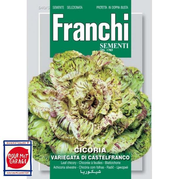 Radicchio variegata di Castelfranco