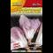 Cicoria rosa - rosa radicchio
