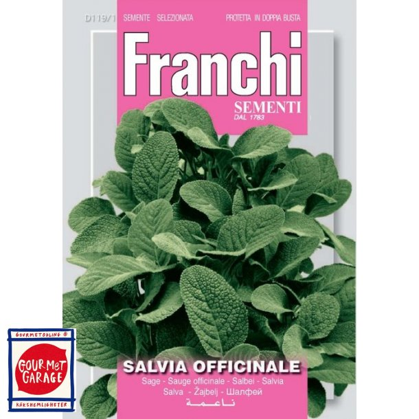 Kryddsalvia (Salvia officinale)