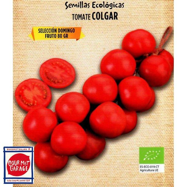 Tomat de Colgar sel. Domingo - ekologiska fröer