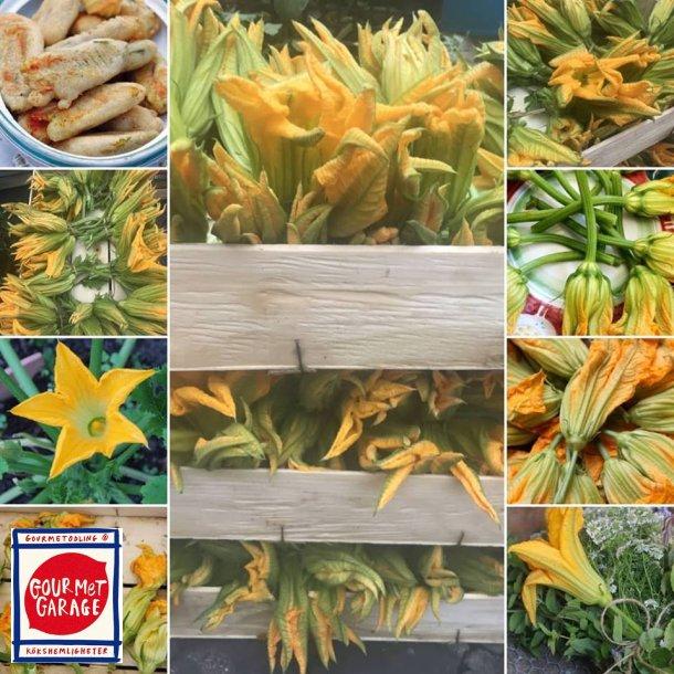 Zucchiniblommor - Zucchino Alberello Sel. Valery