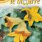 Zucchiniblommor (Zucchini da fiore)