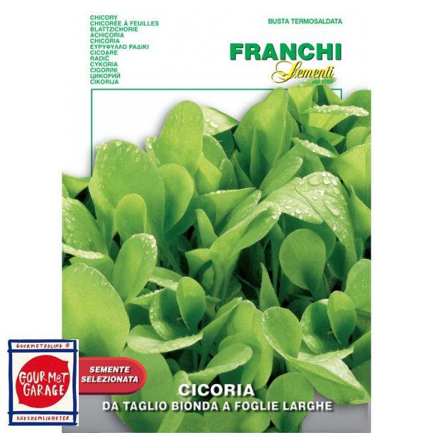 Cicoria bionda a foglia larghe - för cikoriablommor