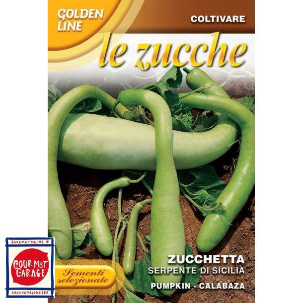 Cucuzza squash /Serpente di Sicilia