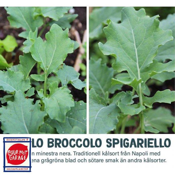 Cavolo broccolo Spigariello (Minestra nera)