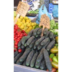 Agurk og melonagurk - agurkefrø