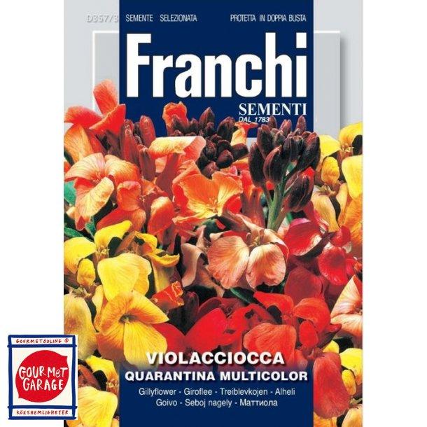 Gyllenlack Violacciocca Quarantina Multicolor